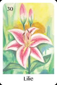 Die Lilie als Tageskarte